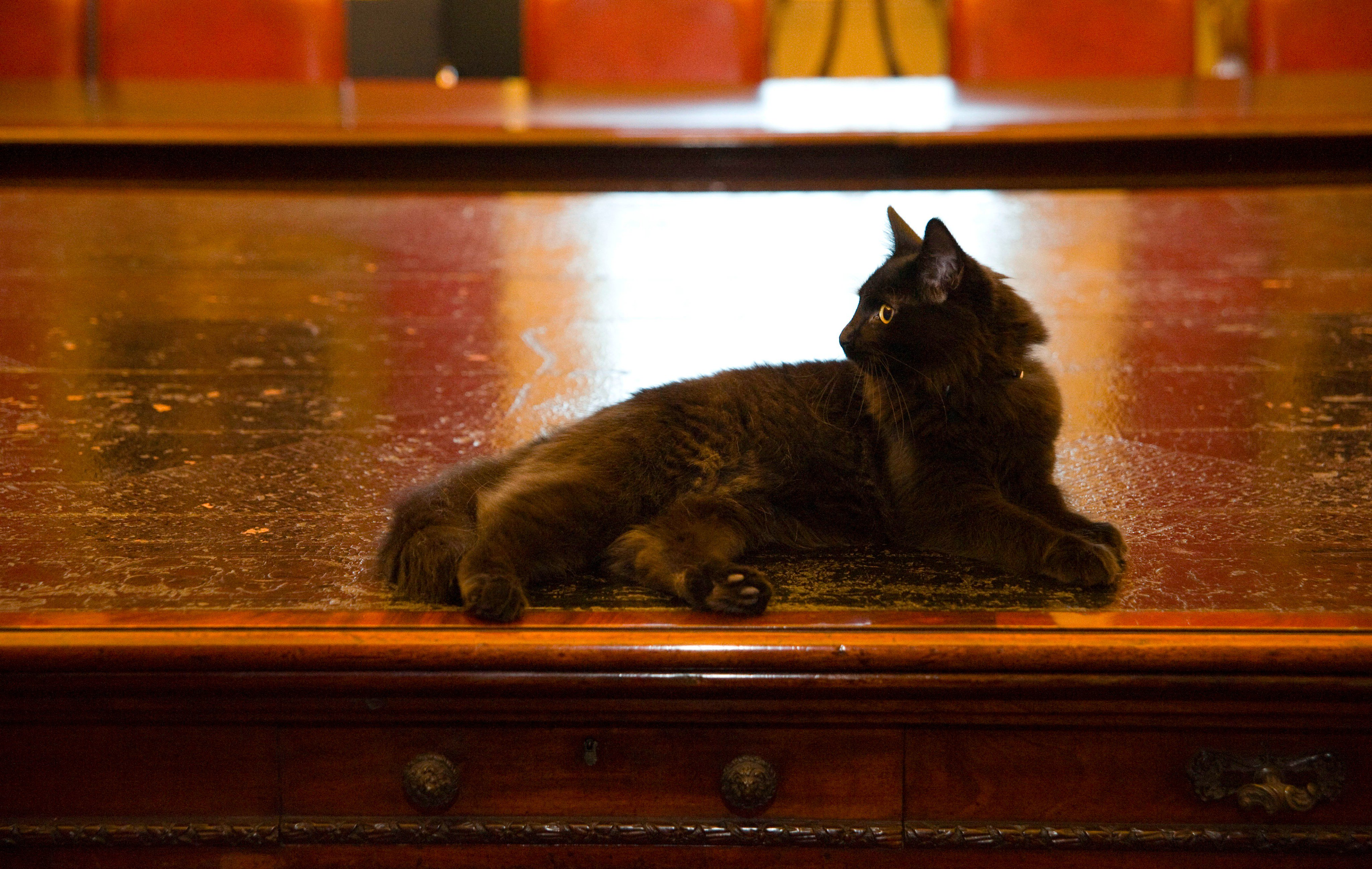 A black cat lounging across a large wooden table.